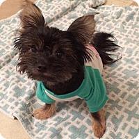 Adopt A Pet :: Cannoli - Dallas, TX