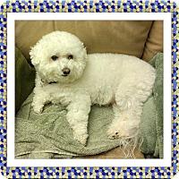 Adopt A Pet :: Adopted!! Casper - VA - Tulsa, OK