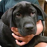 Adopt A Pet :: Patrick - Pembroke, GA
