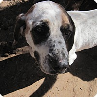 Adopt A Pet :: Bandit - Littleton, CO