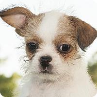 Adopt A Pet :: Smith - Houston, TX