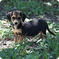 Adopt A Pet :: Roseanne Cash - Groton, MA