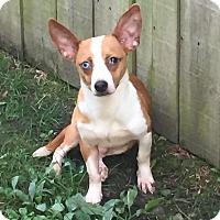 Adopt A Pet :: Fabio - Joliet, IL