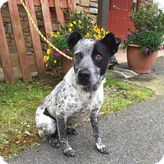 Collie Mix Dog for adoption in Hamilton, Georgia - Millie