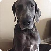 Adopt A Pet :: WATCHER - Houston - Dallas, TX