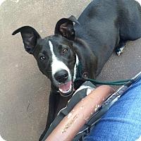Adopt A Pet :: Guinn - WAGONER, OK
