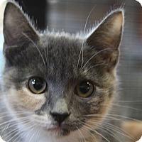 Adopt A Pet :: Peacock - Sarasota, FL