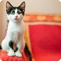 Adopt A Pet :: Penn (Full of Spunk!) - Santa Ana, CA