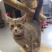 Adopt A Pet :: MAE - Phoenix, AZ