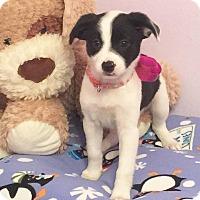 Adopt A Pet :: Sammy - Fort Atkinson, WI