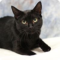 Adopt A Pet :: Blaquelle - Midland, MI