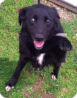 Labrador Retriever Mix Dog for adoption in Metamora, Indiana - Alabama