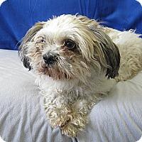 Adopt A Pet :: Sam - Tumwater, WA