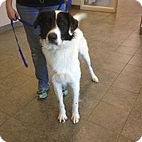 Adopt A Pet :: Louie - Lancaster, OH