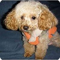 Adopt A Pet :: Fireball - Mooy, AL