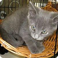 Adopt A Pet :: Paris - Dallas, TX