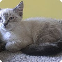 Adopt A Pet :: Scotty Hartnell - Richboro, PA