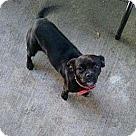 Adopt A Pet :: Lulu