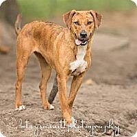 Adopt A Pet :: Jasmine - Havana, FL