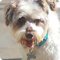 Adopt A Pet :: Reggie - Norwalk, CT