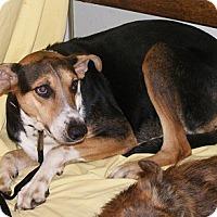 Adopt A Pet :: Chyna - Floresville, TX