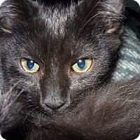Adopt A Pet :: kiki - Salem, OR
