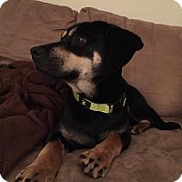 Adopt A Pet :: Toby - Burlington, NJ