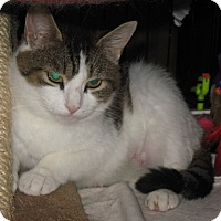 Adopt A Pet :: Moi - brewerton, NY
