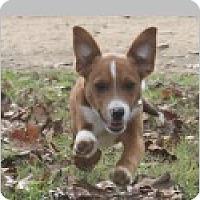 Adopt A Pet :: Boogie - Pittsboro, NC
