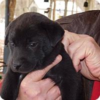 Adopt A Pet :: Bubbles - Brattleboro, VT