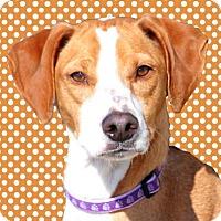 Adopt A Pet :: Rolo - Wichita, KS