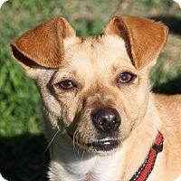 Adopt A Pet :: Asia - Edmonton, AB