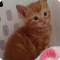 Adopt A Pet :: Rare Gem! - Fayette City, PA