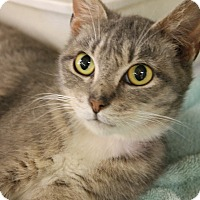 Adopt A Pet :: Glory - Medina, OH
