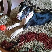 Adopt A Pet :: Cora - Albemarle, NC