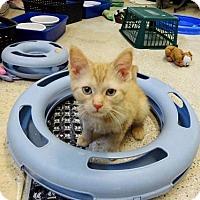 Adopt A Pet :: Funshine - Belleville, MI