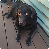 Adopt A Pet :: Tootsie - Staunton, VA