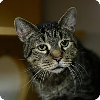 Adopt A Pet :: Gramps - Kettering, OH