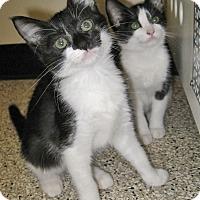Adopt A Pet :: Sarah - Georgetown, TX