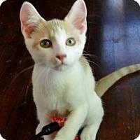 Adopt A Pet :: Speck - Wichita, KS