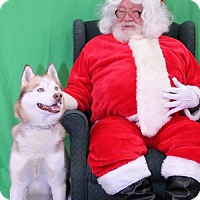 Adopt A Pet :: Rayzr - Mankato, MN