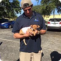 Adopt A Pet :: Rue - Pompano Beach, FL