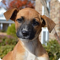 Adopt A Pet :: Melody - CRANSTON, RI