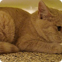 Adopt A Pet :: Thumbelina - Georgetown, TX