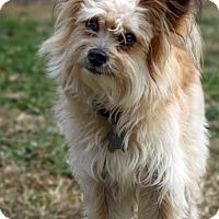 Adopt A Pet :: Gizmo - Stafford, VA