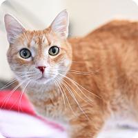 Adopt A Pet :: Landon - Xenia, OH