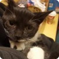 Adopt A Pet :: Half-Stache - McHenry, IL