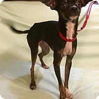 Adopt A Pet :: Moe - Phoenix, AZ