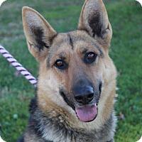 Adopt A Pet :: HARRIET - Red Bluff, CA