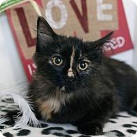 Adopt A Pet :: Esme - Muskegon, MI